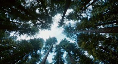 The Tree of Life, Terrence Malick 2011 Cottonwood Pictures, River Road Entertainment, Fox Searchlight Pictures (2)_saveur