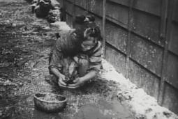 Destins de femmes, Tadashi Imai 1953 Nigorie Bungakuza, Shinseiki Productions (12)